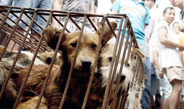 Sniffery Magazine Covers Yulin Festival